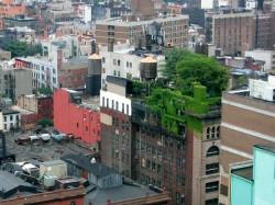Les fermes urbaines:des jardins potagers sur les toits,au Canada,aux USA...